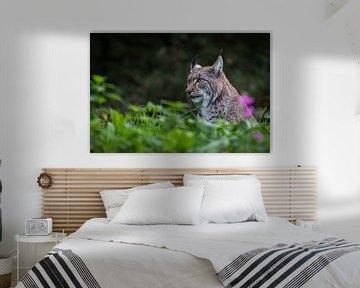 Lynx van Hermen van Laar