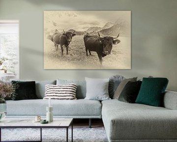 Koeien in sepia van Fabian Roessler