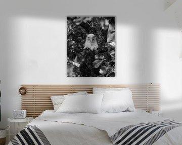 Zeearend op de uitkijk (zwart wit versie)