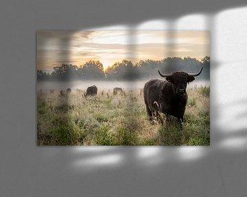 Koeien in de dauw tijdens zonsopgang van Danai Kox Kanters