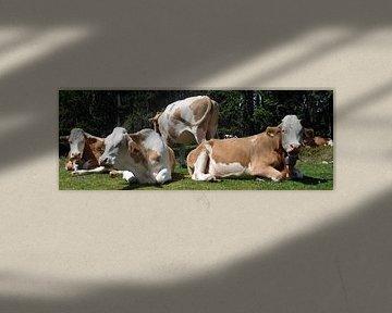 Koeienkudde op de alpenweide van Kunstenares Mir Mirthe Kolkman van der Klip