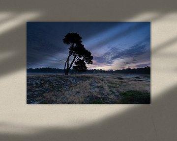 Lever du soleil sur l'arbre solitaire à Heidestein Utrechtse Heuvelrug. sur Peter Haastrecht, van