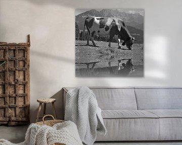Grazende koe zwart wit van Kunstenares Mir Mirthe Kolkman van der Klip