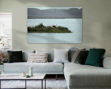 Schotse Hooglander van By Foto Joukje
