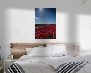 veld met rode tulpen van Arjen Schippers