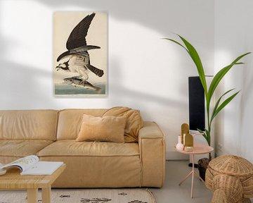 Visarend - Teylers Edition -  Birds of America, John James Audubon van Teylers Museum