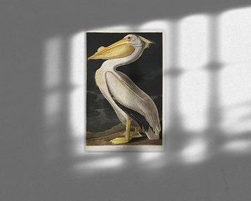 Witte Pelikaan - Teylers Edition -  Birds of America, John James Audubon van Teylers Museum