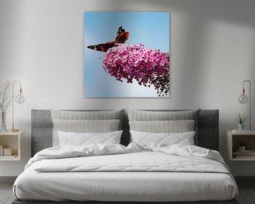 Morena's geheime tuinen : Atalanta op vlinderstruik van Morena 68