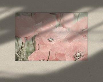 Mohn, Mohn, Rose von Caroline Drijber