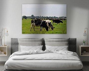 Niederländische Landschaft mit grasenden Kühen im Grünen Herzen bei Woerden, Utrecht von Robin Verhoef