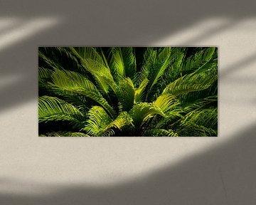 Panorama Groen Bladeren Japanse Palmvaren Cycas revoluta van Dieter Walther