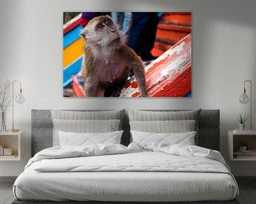 Nieuwgierige aap van Ludo Marrink
