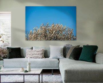 Wit bloeiende boom van Pictorine