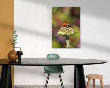 Lieveheersbeestje op een bloemknop met een kleurrijke achtergrond von Dagmar Hijmans