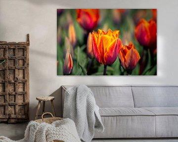 Orangefarbene Tulpen von Eugenlens