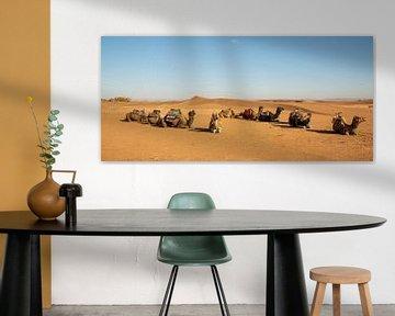 kamelen in de woestijn van Marokko van Jan Fritz