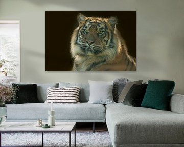 Tijger, Panthera Tigris