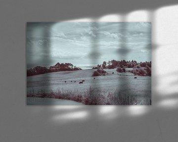Landschaftsfoto über Knebel in Dänemark von Tina Linssen