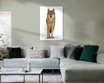 Wolf von Marcel Schauer