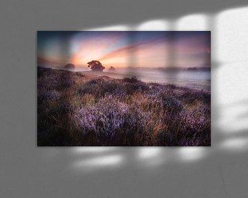 Lever de soleil sur la lande sur Steffen Peters