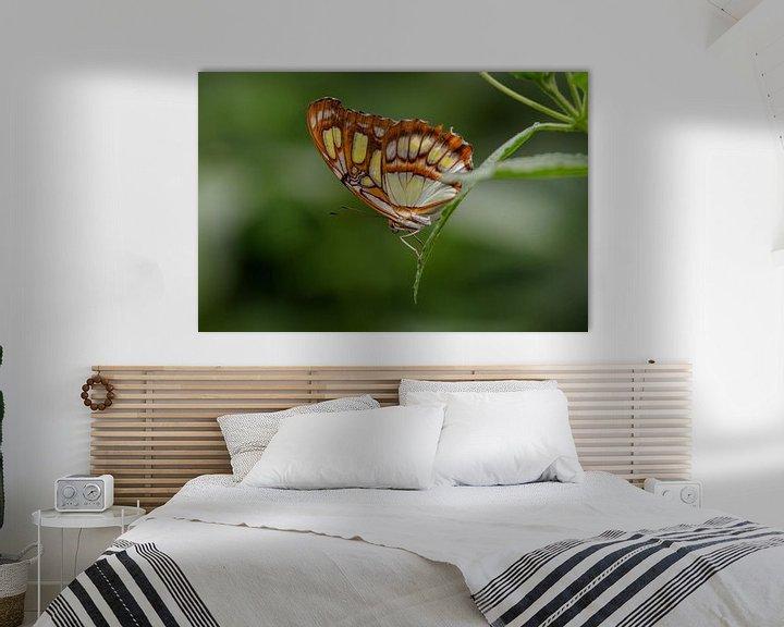 Impression: Papillon malachite sur Anjo ten Kate