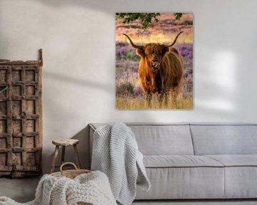 Schotse hooglander op paarse hei! van gooifotograaf