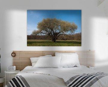 Blühender Baum von Anita van Hengel