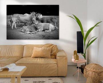 Groepsfoto Koeien in weiland