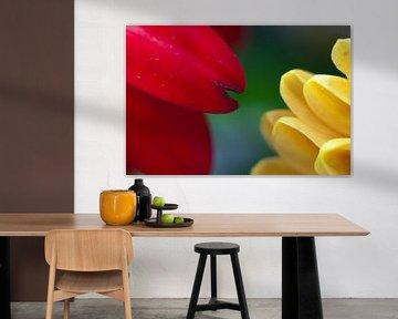 Gerbera trifft Chrysantheme von Anita van Hengel