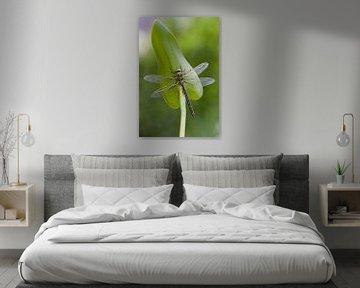 Libelle von Maura Klumper