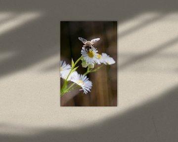 Bij op een bloem von Ilse Radstaat