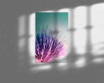 Distelblüte von Roswitha Lorz