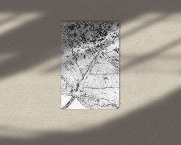 Bladstructuur van Lucia Leemans