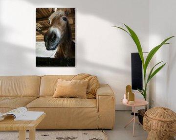 Een paardenhoofd