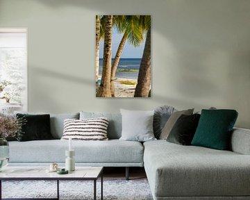 Palmen und Meer mit Bangka Boot zum Sonnenuntergang auf der Insel Siquijor auf Philippinen