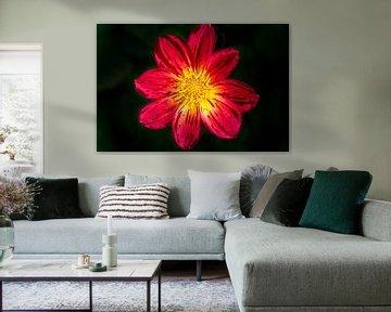 Rote Blume (Cosmos) von Eline Bouwman