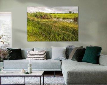 Herbes, joncs et carex ondulants dans un polder néerlandais