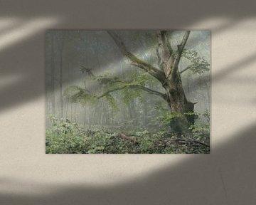 Magische boom van Max Schiefele