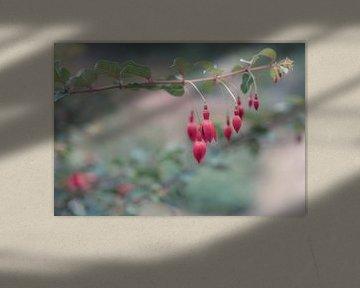 Blumen Teil 185 von Tania Perneel