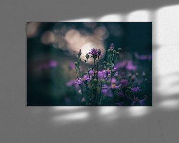 Blumen Teil 195 von Tania Perneel