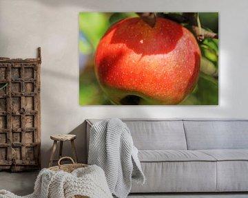 Pomme mûre sur l'arbre sur Udo Herrmann