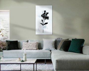 Clematis klebt an der Wand von Lynlabiephotography