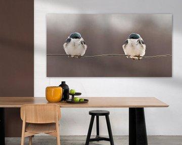 Oiseaux sur un fil, Lucie Gagnon sur 1x