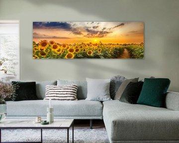Sonnenblumenpfad am Abend | Panorama von Melanie Viola