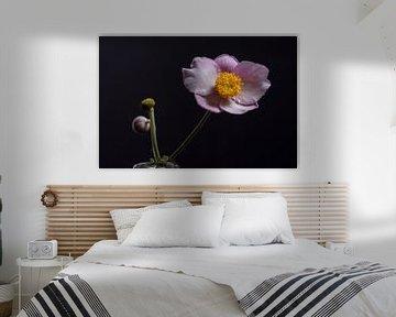 anemone september charm von anne droogsma