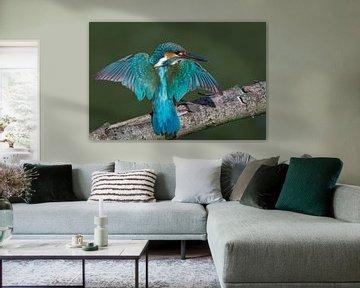 Martin-pêcheur aux ailes déployées sur une branche sur Jan Jongejan