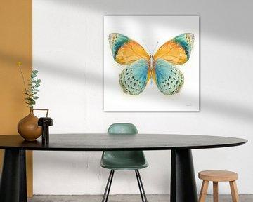 Breekbare vleugelsvlinder I, Danhui Nai van Wild Apple