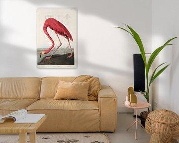 American Flamingo - Teylers Edition - Birds of America, John James Audubon van Teylers Museum