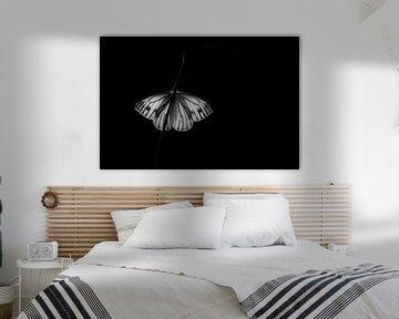 Kleines geädertes Weiß in Schwarz von Mark Dankers