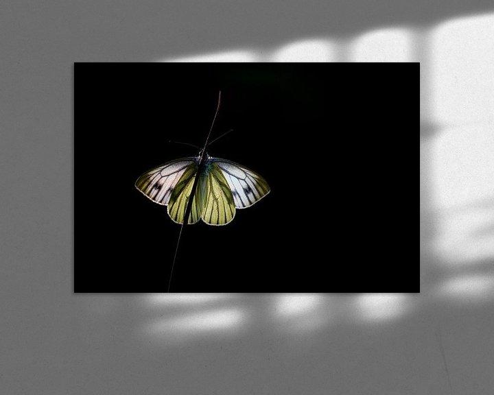 Sfeerimpressie: High-key Klein geaderd witje van Mark Dankers